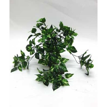 Pothos Trails