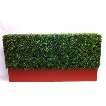 Boxwood hedge in Planterbox
