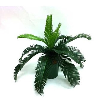 Potted Cycad Fern