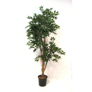 Mini Ficus Tree