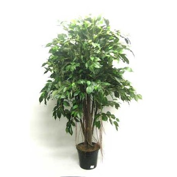 Mini Double Ficus Tree
