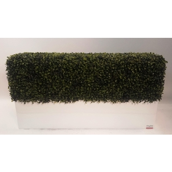 Boxwood hedge in Planterbox - Deluxe Option