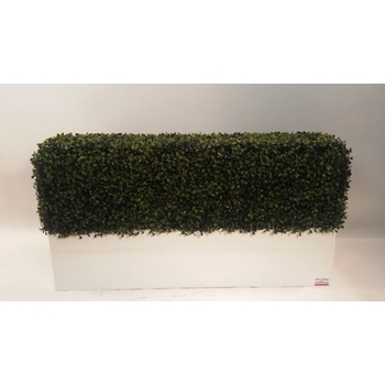Boxwood hedge in Planterbox- Standard Option