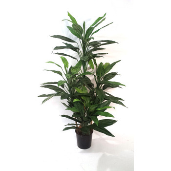 UV Green Leaf Dracaena