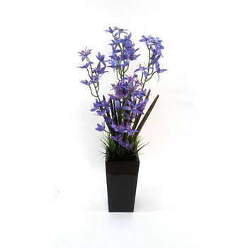 Blue Dendrobium Arrangement