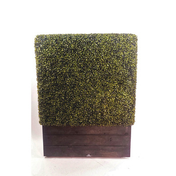 Boxwood  Hedge Planterbox