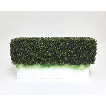 Boxwood Hedge Insert - Standard