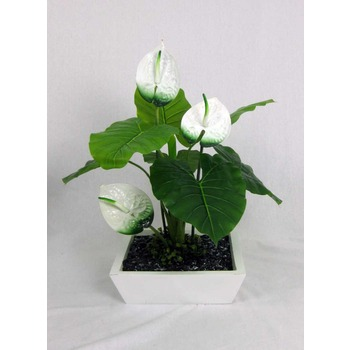 White Flowering Anthirium Planter