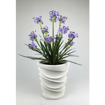 Agapanthus in Designer Collection