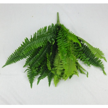Boston Fern Flat Pac