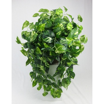 Pothos Trail Hanging Basket