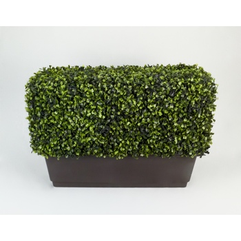 Mini Boxwood Window Hedge