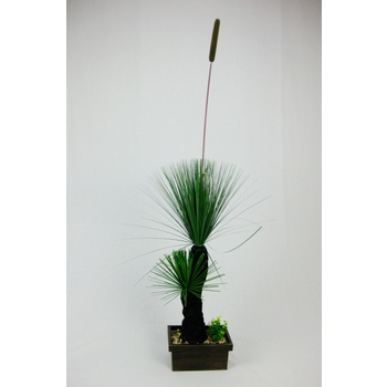 Eureka Grass Tree