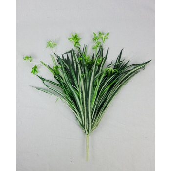 Spider Plant BUY 1 GET 1 FREE