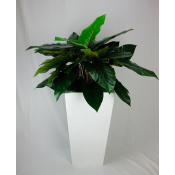 Philodendron in Fibreglass Container