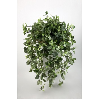 UV Fittonia Hanging Basket