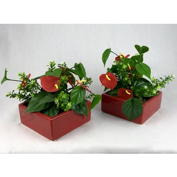 Anthirium Garden Planter