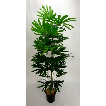 UV Raphis Palm