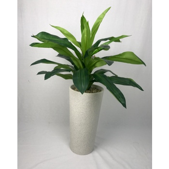 Green Dracaena in Black Gloss Container