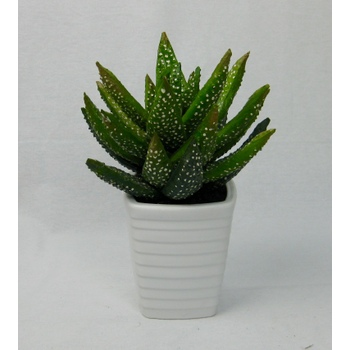 Speckled Aloe-Vera in Pot