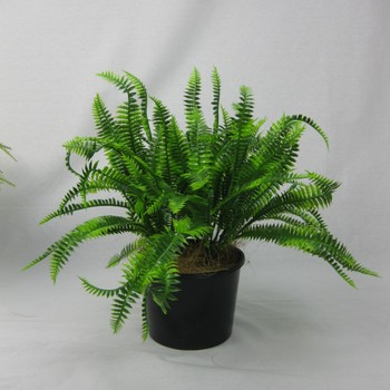 UV Bush Fern