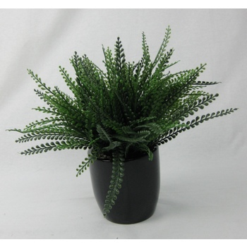 Olive Fern Grass in Pot