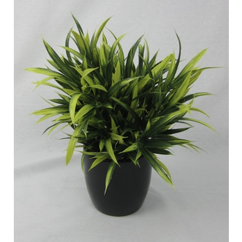 Lime & Olive Grass Pot