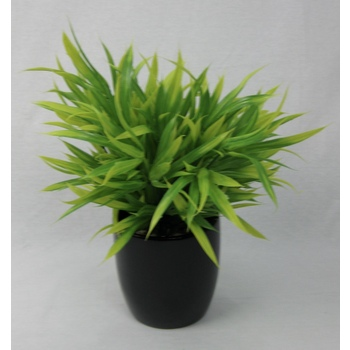 Lime & Green Grass Pot