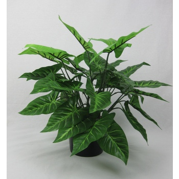 UV Double Syngonium Plant