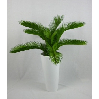Cycad in White Fibreglass Container