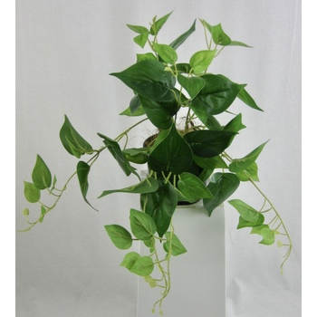 Potted Green Pothos