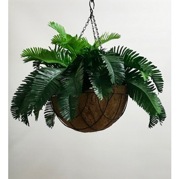 Triple Cycad  Hanging Basket
