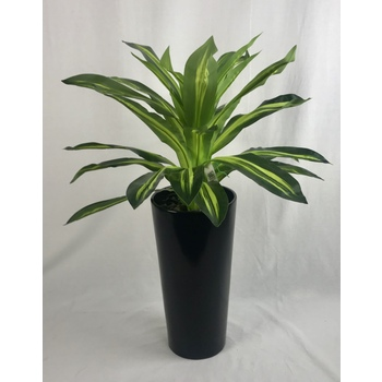 Dracaena in Fibreglass Container