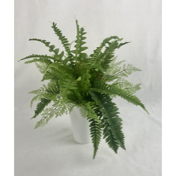 Fern in Fibreglass Container