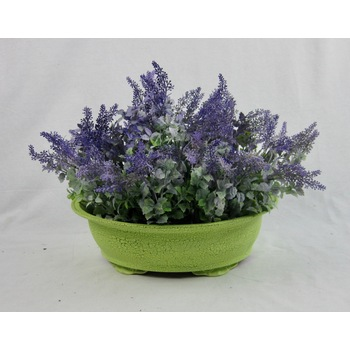 Lavender Bush in container