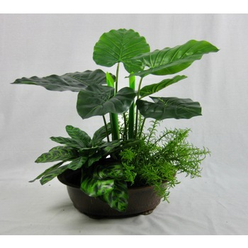 Philo Greenery in container
