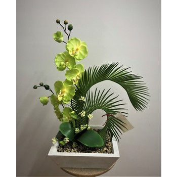Lime Orchid in FIbreglass Container