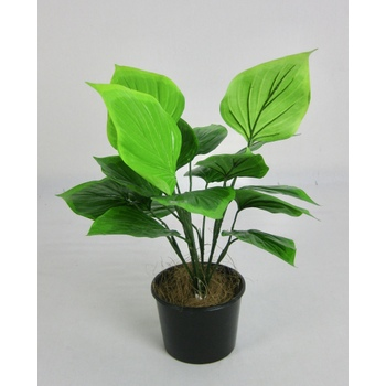 UV Green Leaf Plant