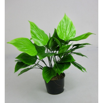 UV Double Green Leaf Plant