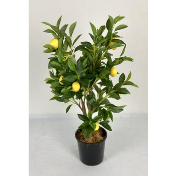 2 Stem Lemon Tree