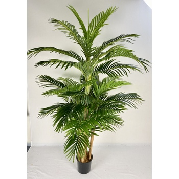 Tropical Areca Palm