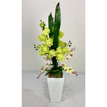 Lime Orchid in FIberglass Container
