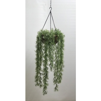 UV White Tip Springeri Hanging Basket