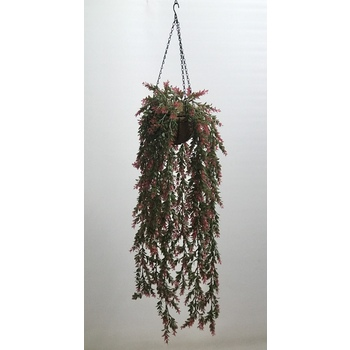 UV Red Sweet Grass Hanging Basket